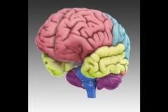 3D Brain арр